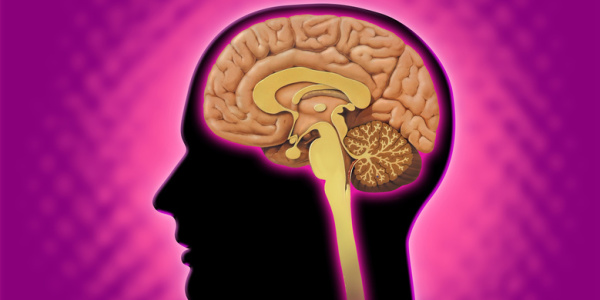 Hormones, Brain and Energy! Focus on Two Important Organs to Balance Hormones!