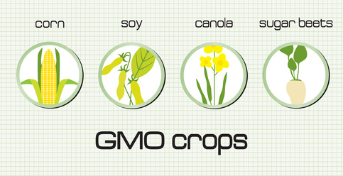 GMO Mystery Exposed – Healing Leaky Gut